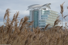 St David's Hotel through the grasses