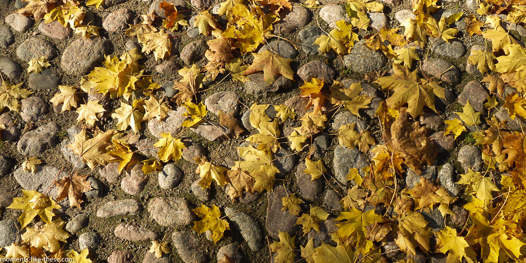 Leaves on cobbles