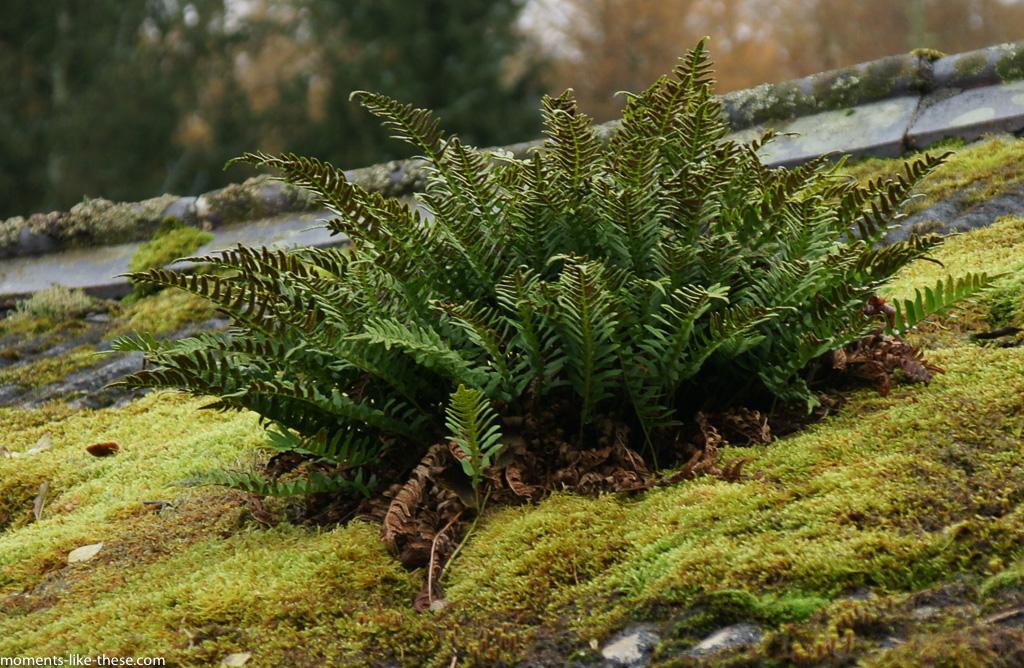 Rooftop fern