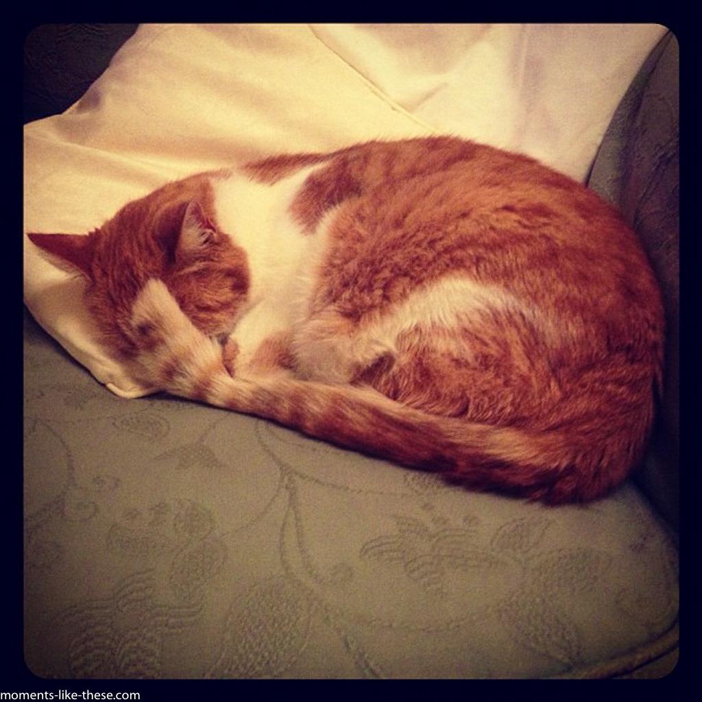 Jasper-asleep_21.jpg