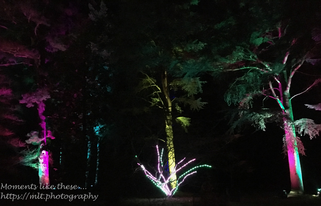 Westonbirt Winter Lights