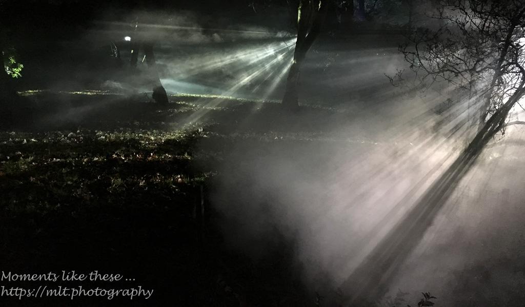 Westonbirt Winter Lights
